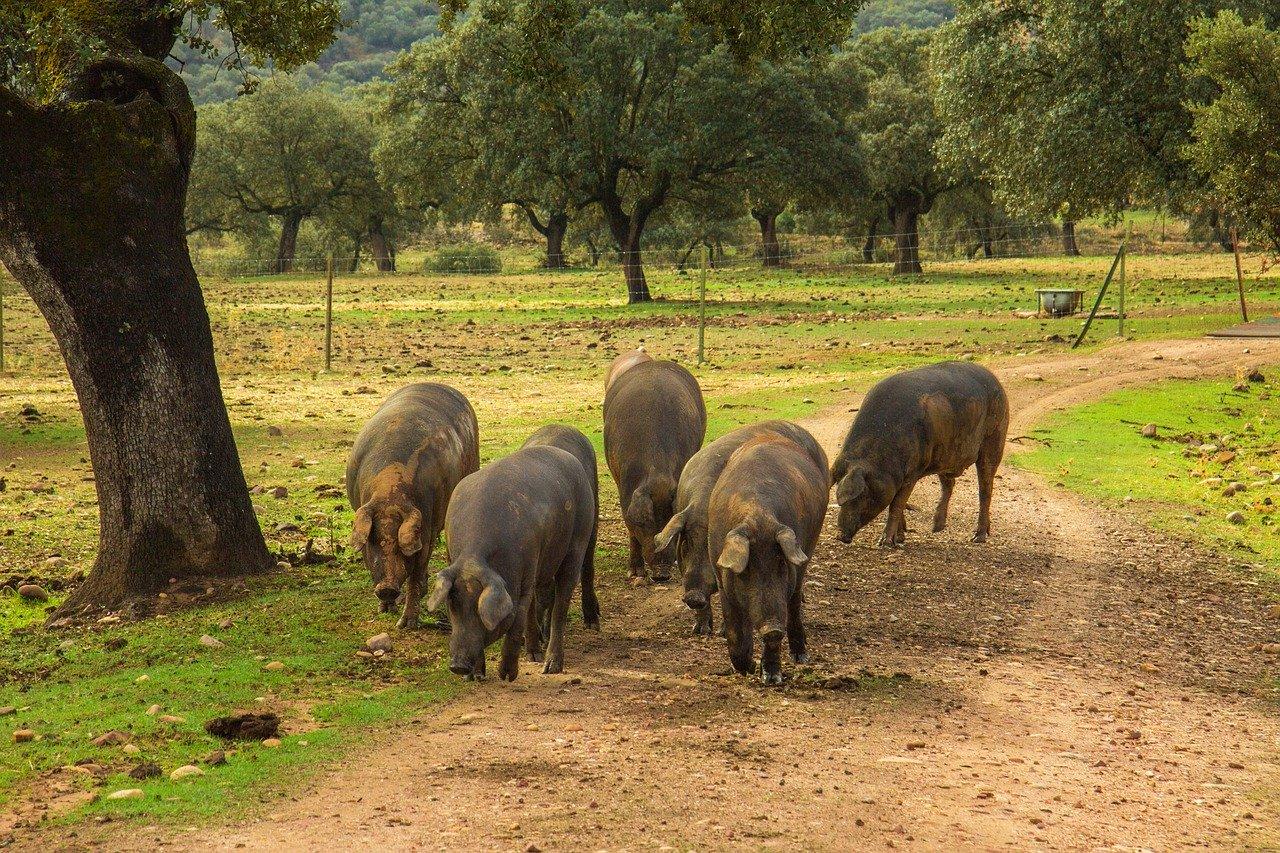 Carne ecológica